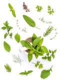 Varie erbe fresche dal basilico santo del giardino, fiore del basilico, r Fotografia Stock Libera da Diritti