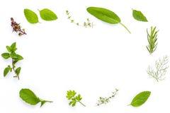 Varie erbe fresche dal basilico santo del giardino, fiore del basilico, r Fotografia Stock