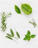 Varie erbe fresche dalla menta piperita del giardino, basilico, ro Immagini Stock Libere da Diritti