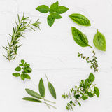 Varie erbe fresche dalla menta piperita del giardino, basilico, ro Fotografie Stock Libere da Diritti