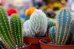 Varie piante del cactus, fuoco selettivo Fotografie Stock