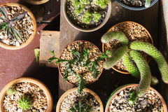 Varie piante del cactus, vista superiore Immagine Stock Libera da Diritti