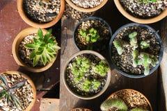Varie piante del cactus, vista superiore Fotografia Stock Libera da Diritti