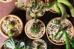 Varie piante del cactus, vista superiore Fotografie Stock