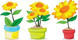 Varie piante di POT Fotografia Stock