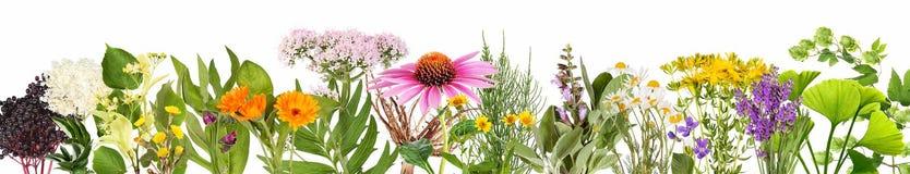 Varie piante medicinali, isolate illustrazione di stock