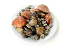 varied clams свежее Стоковое фото RF