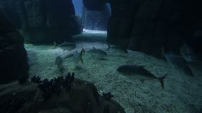 Varied fish and amphibians in a giant aquarium for entertainment to tourists. Varied fish and amphibians in a giant aquarium for entertainment to tourists stock video