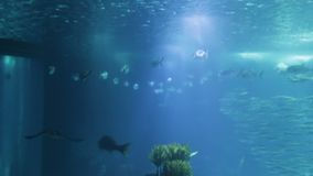 Varied fish and amphibians in giant aquarium for entertainment to tourists. Varied fish and amphibians in a giant aquarium for entertainment to tourists stock footage