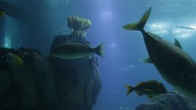 Varied fish and amphibians in a giant aquarium for entertainment to tourists. Varied fish and amphibians in a giant aquarium for entertainment to tourists stock video footage