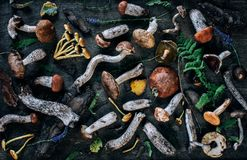 Varied forest mushrooms, top view. Varied forest mushrooms on a dark wooden background, top view stock image