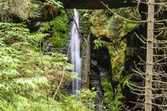 Varied forest vegetation with a waterfall Stock Images