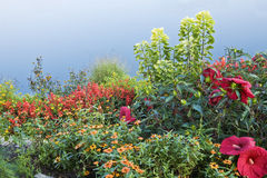 Varied Garden Royalty Free Stock Photography