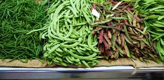 Varied green Beans from Mediterranean Stock Photos