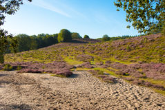 Varied landscape. The Posbank is a particularly heathland in the Netherlands Royalty Free Stock Images