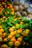 Varied Mandarins with Attached Leaves Royalty Free Stock Photos
