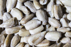 Varied seeds royalty free stock photos