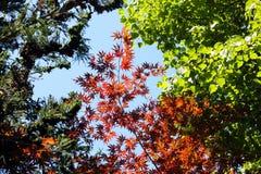 Variedad de árboles contra el cielo azul Foto de archivo libre de regalías