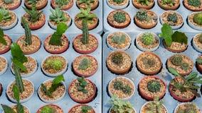 Variedad de cactus en la bandeja foto de archivo
