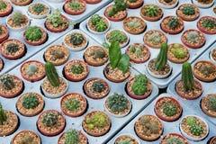 Variedad de cactus en la bandeja gris fotografía de archivo