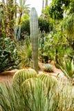 Variedad de cactus y de palmeras Fotografía de archivo
