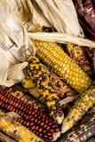 Variedad de diverso maíz indio coloreado en la exhibición Fotos de archivo libres de regalías