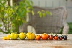 Variedad de diversos tomates raros Fotos de archivo libres de regalías