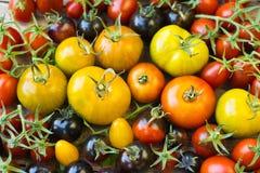 Variedad de diversos tomates raros Imagen de archivo libre de regalías