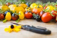 Variedad de diversos tomates raros Foto de archivo