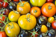 Variedad de diversos tomates raros Imagen de archivo