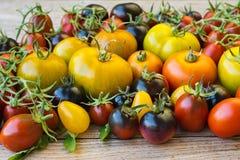 Variedad de diversos tomates raros Fotografía de archivo