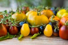 Variedad de diversos tomates raros Fotografía de archivo libre de regalías