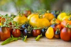 Variedad de diversos tomates raros Imágenes de archivo libres de regalías