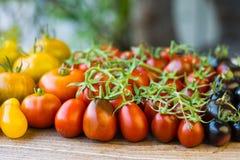 Variedad de diversos tomates raros Fotos de archivo