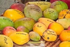 Variedad de escogido recientemente, local, mango en un mercado de los granjeros imagenes de archivo