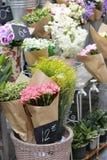 Variedad de flora Foto de archivo libre de regalías