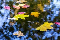 Variedad de hojas otoñales brillantes en charco del agua Imagen de archivo