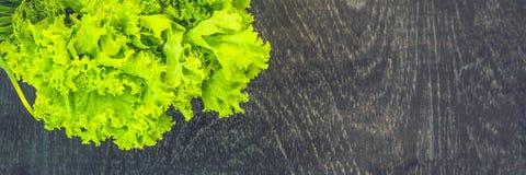 Variedad de la BANDERA de hierbas orgánicas frescas en un viejo fondo de madera Formato largo Imagen de archivo libre de regalías