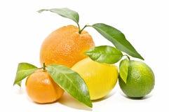 Variedad de la fruta cítrica Fotos de archivo libres de regalías
