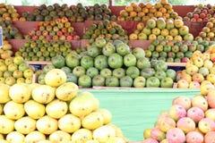 Variedad de mangos Fotos de archivo libres de regalías