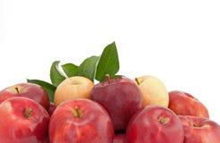 Variedad de manzanas rojas y amarillas con las hojas Imágenes de archivo libres de regalías