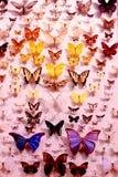 Variedad de mariposas Imagen de archivo libre de regalías