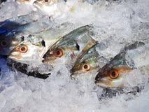 Variedad de mariscos de los pescados frescos en fondo del primer del mercado Fotos de archivo