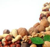 Variedad de nueces culinarias frescas como frontera Imagenes de archivo