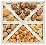 Variedad de nueces en cáscaras Imagen de archivo libre de regalías