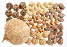 Variedad de nueces en cáscaras Imagen de archivo