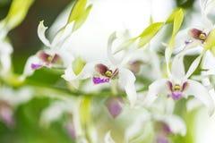 Variedad de orquídea Fotos de archivo