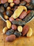 Variedad de patatas del pececillo en colador Fotos de archivo