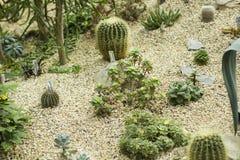 Variedad de pequeño cactus hermoso en el pote Desierto en miniatura Foto de archivo