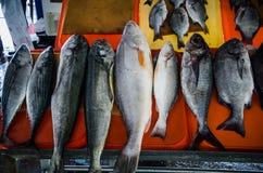 Variedad de pescados imágenes de archivo libres de regalías
